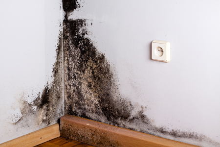 Mold: The Facts!
