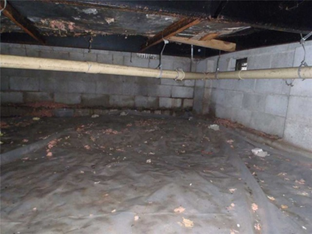 Crawlspace Mold: Tips and Tricks To Prevent It!
