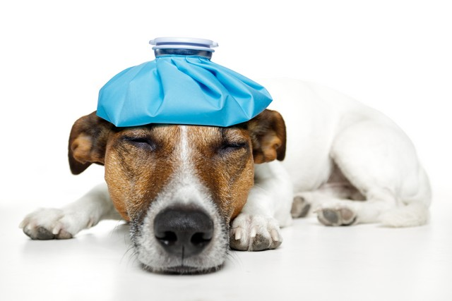 How Do I Know My Pet Is Sick?