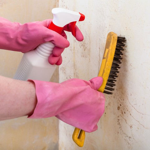 If You Find Mold In Your Home or Business, DO NOT Remove It!