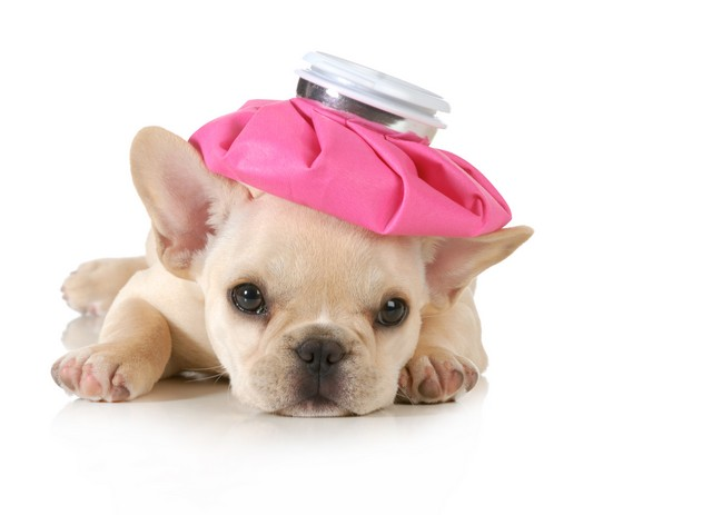 Dangers Of Mold To Your Pets!