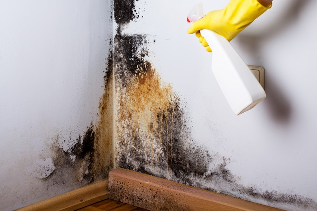 Ever wonder what happens when mold is removed? Mold removal professionals have specialized training to remove mold and prevent cross contamination. If you think that mold is growing in your home or business and want to ensure that it is removed correctly, DO NOT hire someone that recommends spraying the mold with bleach. To get your mold removal done right the first time, hire a professional that implements these 8 steps!