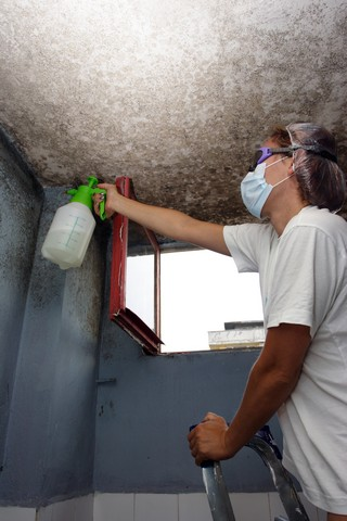 Mold Removal Professionals Follow An Eight Step Process!