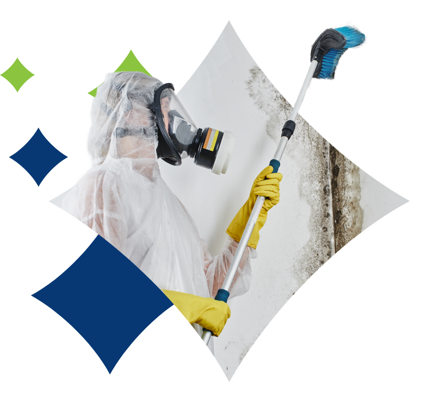 mold technician removing mold with scrub brush | mold removal | NuTech Mold & Water