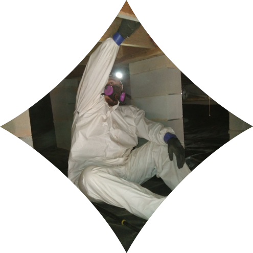 man in crawl space checking for mold   mold removal   NuTech Mold & Water