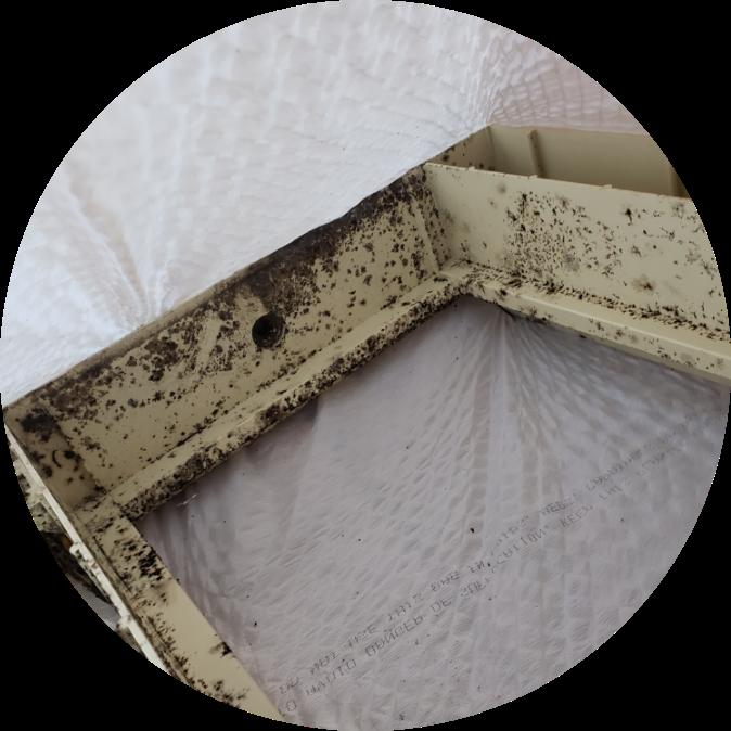 Black Mold On Dresser Drawer | Black Mold | NuTech Mold & Water |